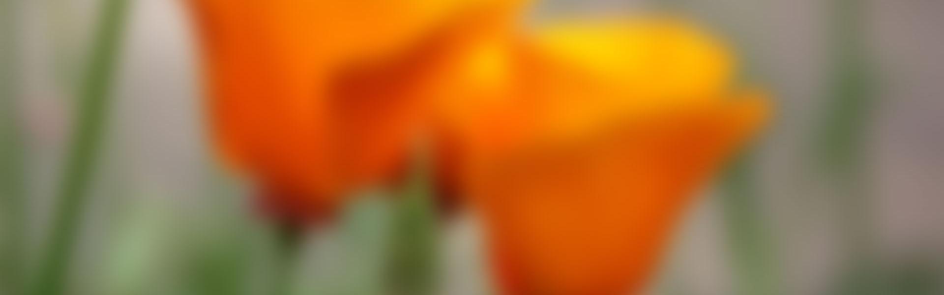 Wazige bloemen foto Praktijk Shufu