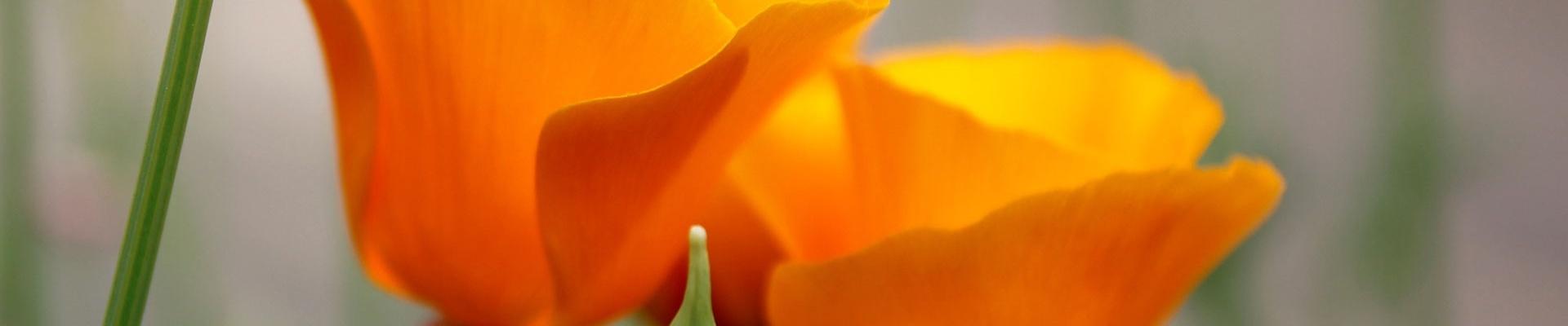 Bloemen Praktijk Shufu